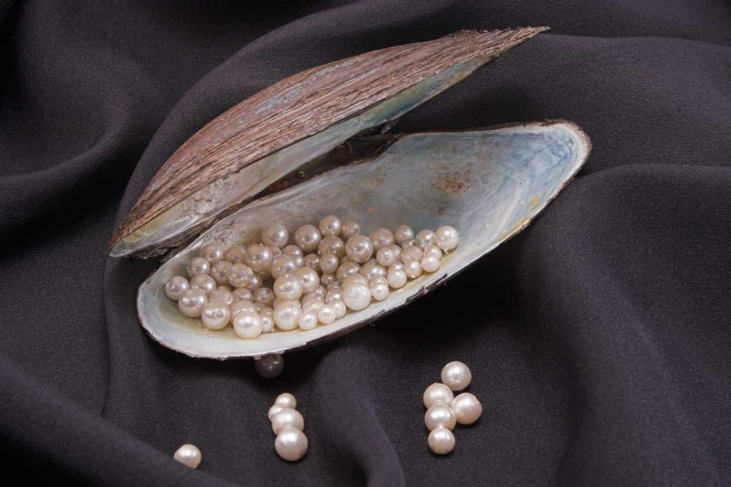 Perlen in geöffneter Muschelschale